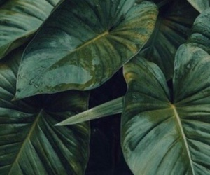 green, background, and leaves image