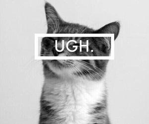 cat, ugh, and animal image