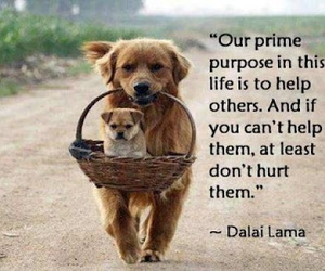 quotes, life, and dog image
