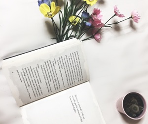 books, cactus, and clean image