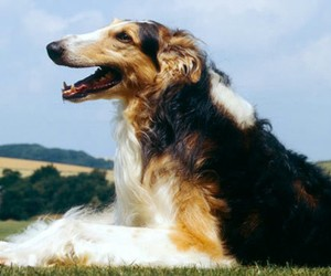 adorable, dog, and good dog image
