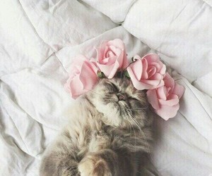 aesthetic, cute, and cats image