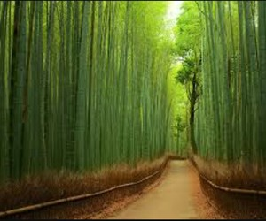japan, green, and bamboo image