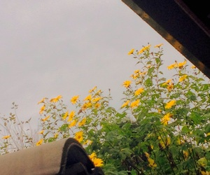 different, pretty, and sunflower image