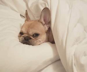adorable, bed, and dog image
