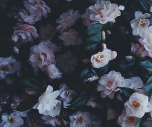 dark, flowers, and grunge image