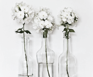 background, water, and white flowers image