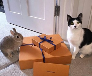 bunny, cat, and kitty image