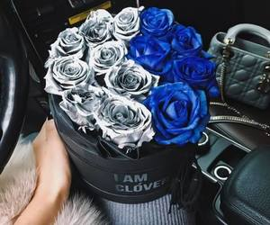 flowers, roses, and blue image