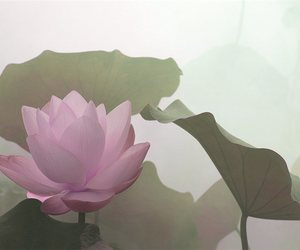 flower and lotus image