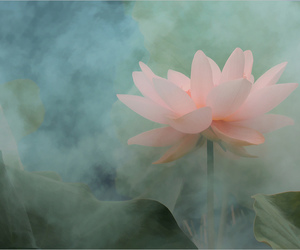 flower, peace, and lotus image