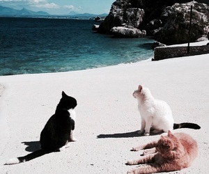 animals, beach, and cats image