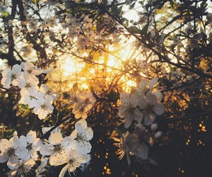 flowers, light, and photography image