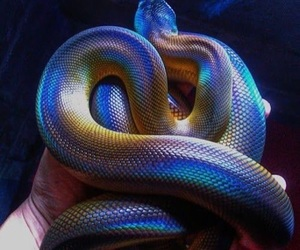 snake, animal, and colors image