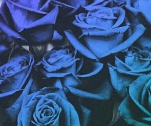 blue, rose, and blurlerose image
