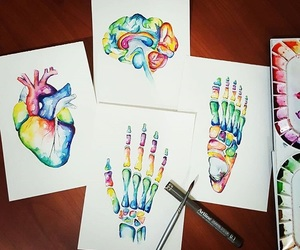 anatomia, art, and arte image