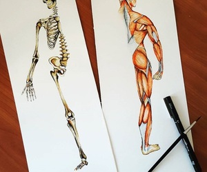 anatomia, anatomy, and art image