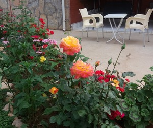 garden, roses, and my garden image