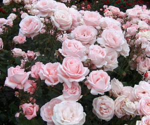 beautiful, blommor, and flores image