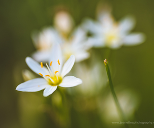 flowers, macro, and nature image