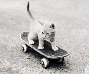 and, skateboard, and white image