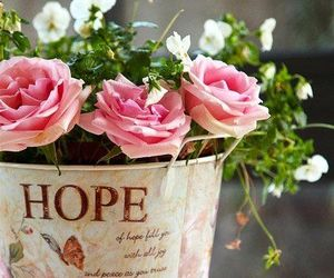 flowers, rose, and hope image