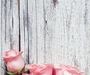 rose, flowers, and background image
