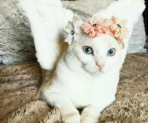 <3, crown, and lovely image
