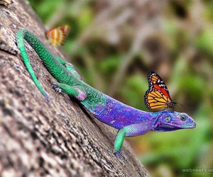 amazing pictures, photography inspiration, and wildlife photography image