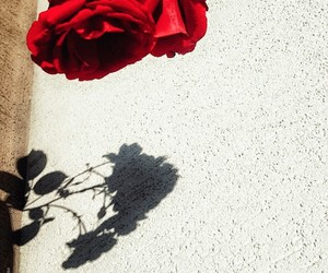 crush, red, and roses image