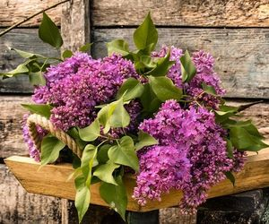 flower arrangement, flowers, and lilac image