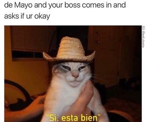 cat, cats, and espaniol image