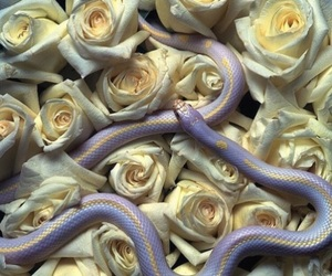 snake, rose, and flowers image