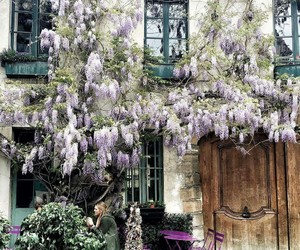 coffee, spring, and france image