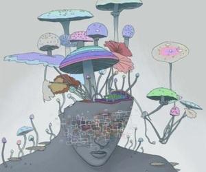 mushrooms, mushies, and psychedelics image
