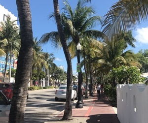 Miami, palms, and palm trees image
