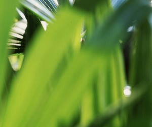 green, palm trees, and plants image