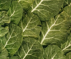 green, pattern, and leaves image