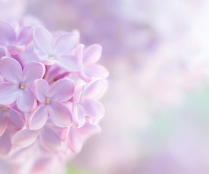 flower, lilac, and pastel image