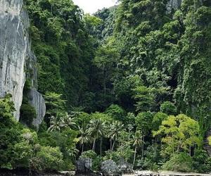 jungle life image