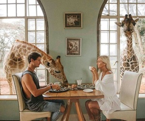 couple, giraffe, and goals image