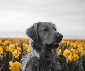 dog, field, and flowers image