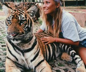 animal, tiger, and summer image