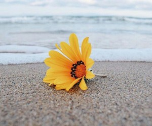 42 images about bunga matahari sunflower on we heart it see more