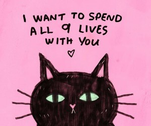 cat, pink, and life image