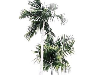 palmtree, summer, and tropical image
