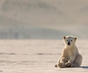 Animales, oso, and naturaleza image