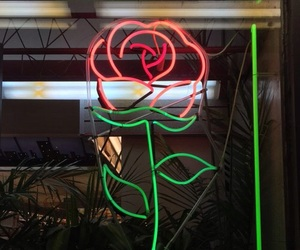 rose, aesthetic, and neon image