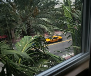 green, plants, and taxi image
