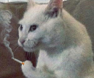 cat, smoke, and reaction image image